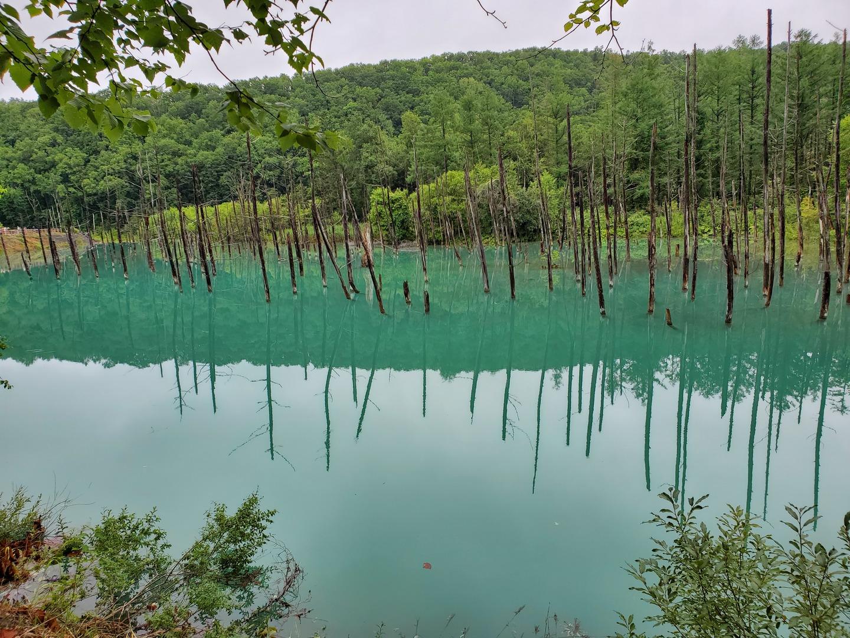 雨が降って肌寒かった。青い池が エメラルドグリーンだったので残念でした😣💦⤵️  晴れてたら 最高でした。