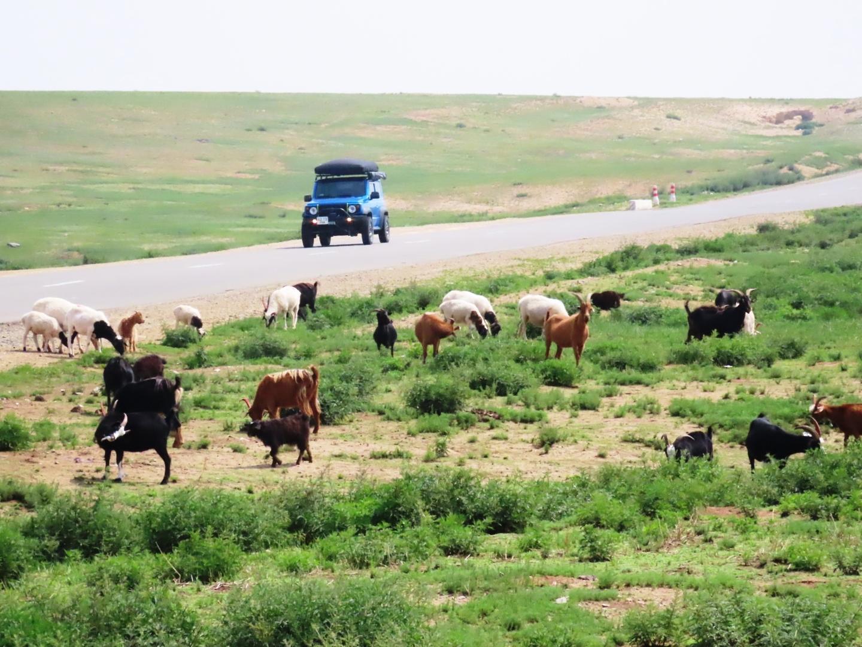 8月初旬、夏だけのモンゴル航空の直行便と、HIS現地ツアー活用でモンゴルに行きました。  HISの「カラコルム」を巡る1泊2日ツアーは、 なんと我々夫婦だけの借り切りツアー  ガイドさんの実家は、今も遊牧民、カラコルムまでは380㎞、彼の知見に退屈しない。ところどころで、草を食む羊や牛を見て、しばし休憩する。  羊、馬肉と、牛肉の食べ比べ 後日、ガイドさん推薦のしゃぶしゃぶ屋、焼肉屋 双方で、断然、羊が旨いことが判った。  歴史好きにはン感動のオルホン川。  岡の上の「大モンゴルマップ」を見て、 振り向けば、はるかにオルホン川、 ジンギスカンや息子たちの雄姿が目に浮かぶ  カラコルムのゲルの食堂で乾杯。 HIS現地ツアー・カラコルムを巡る1泊2日 のガイドさん(左)とドライバー(中央)  ガイドさんは日本語学科卒、日本通 すっかり気に入って、最終日に、自分では億劫な日本人墓地やドルゴイ記念碑の案内を頼んだ。  HISツアー・モンゴル民族舞踊鑑賞は満員盛況、 安全を考慮して、16時からにしたが、緯度が高く20時頃でも明るかった。  旅行費用は、夫婦2人で¥315,000でした。