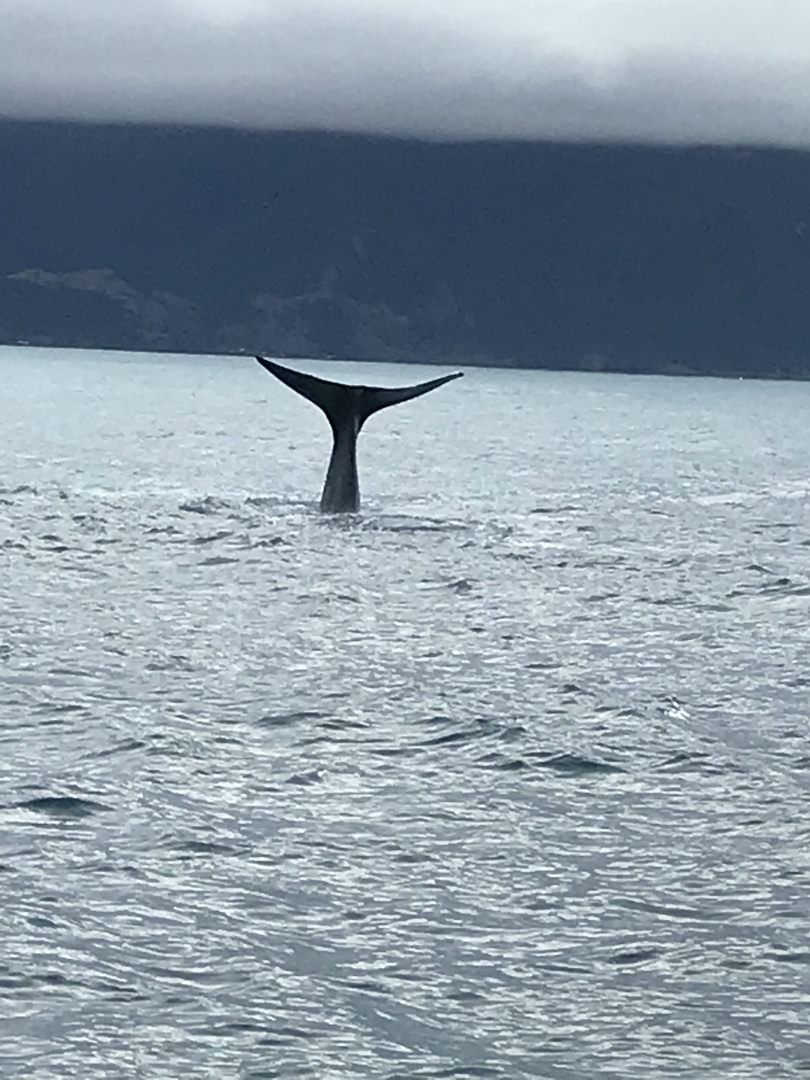 ひとりでの参加でしたが、安心してツアーを楽しめました。ドライバーさんは、現地の方でしたが、大変礼儀正しく、気遣いもよくしていただきました。雄大なニュージーランドの田舎を堪能しながらカイコウラに到着。船は大変ゆれますが熟練船員たちが鯨生息地域に船を移動させ、間近で鯨に出会えることができました。よい旅の思い出になりました。