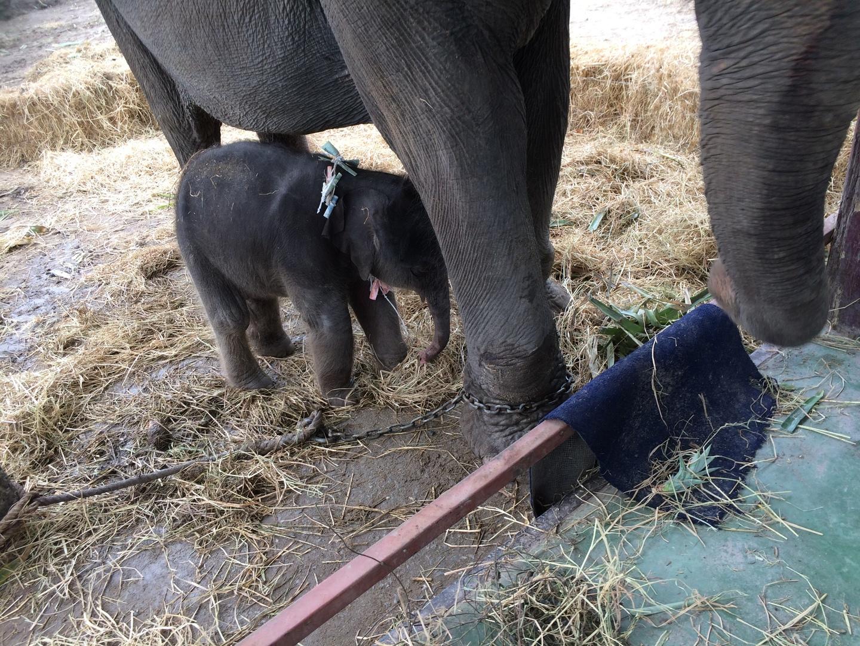 ぎゅっと1日で見たい所に行けたので満足なツアーでした。朝生まれたばかりの赤ちゃんゾウまで会えてラッキー!