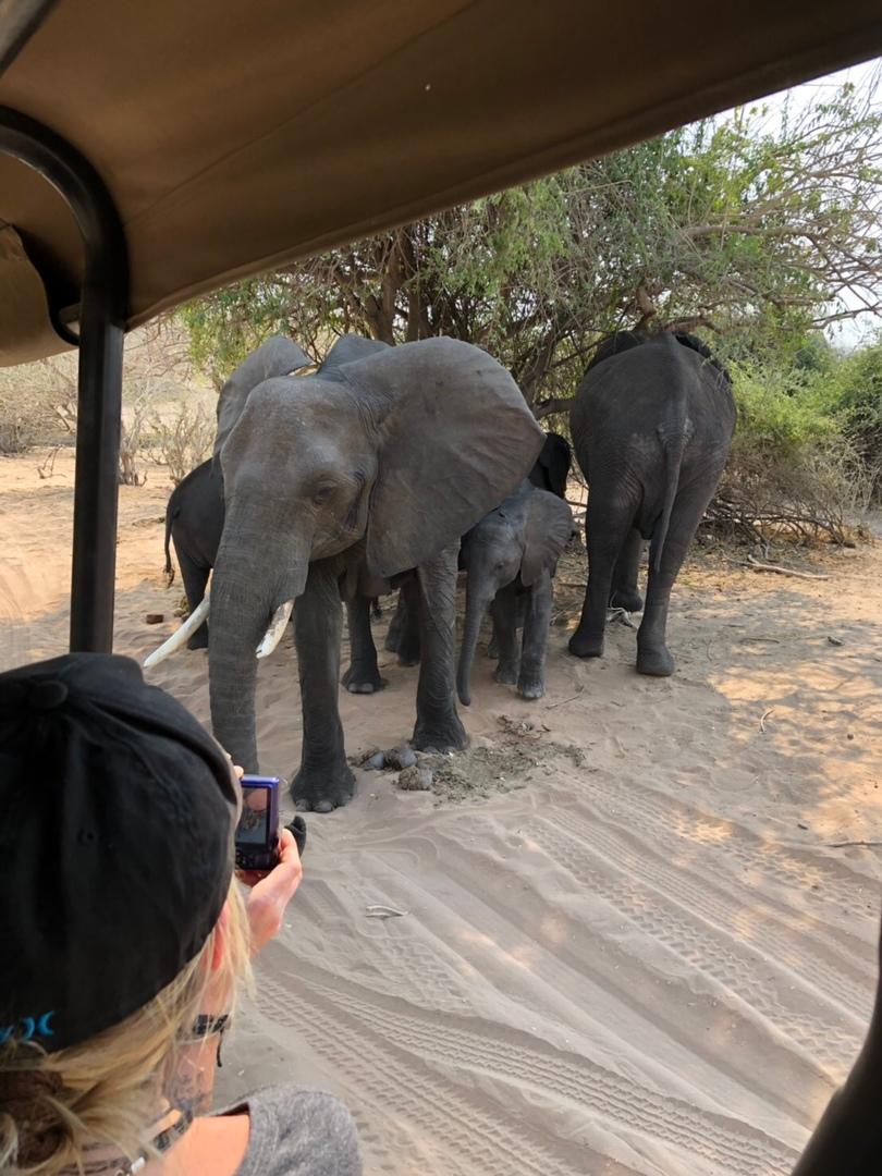ジンバブエから車で1時間程度、ボツワナ入国後、国境でサファリのツアー会社の車に乗り換え、30分程度でチョベ川ほとりに到着します。まずはリバーサファリ。たっぷり2時間。ヘビ、カバ、ワニ、ゾウなどに会えました。ランチはバイキング形式でインパラのステーキもありました。午後はジープで凸凹道を。ゾウは間近に接近、ライオンにも。会えました。