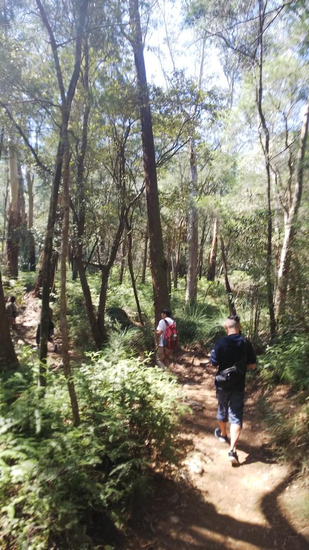 オーストラリアの大自然を感じてのハイキングツアーは、ガイドのヒデさんのお陰でとても楽しいものとなりました。  ランチもボリュームがあり美味しかったです。ありがとうございました。