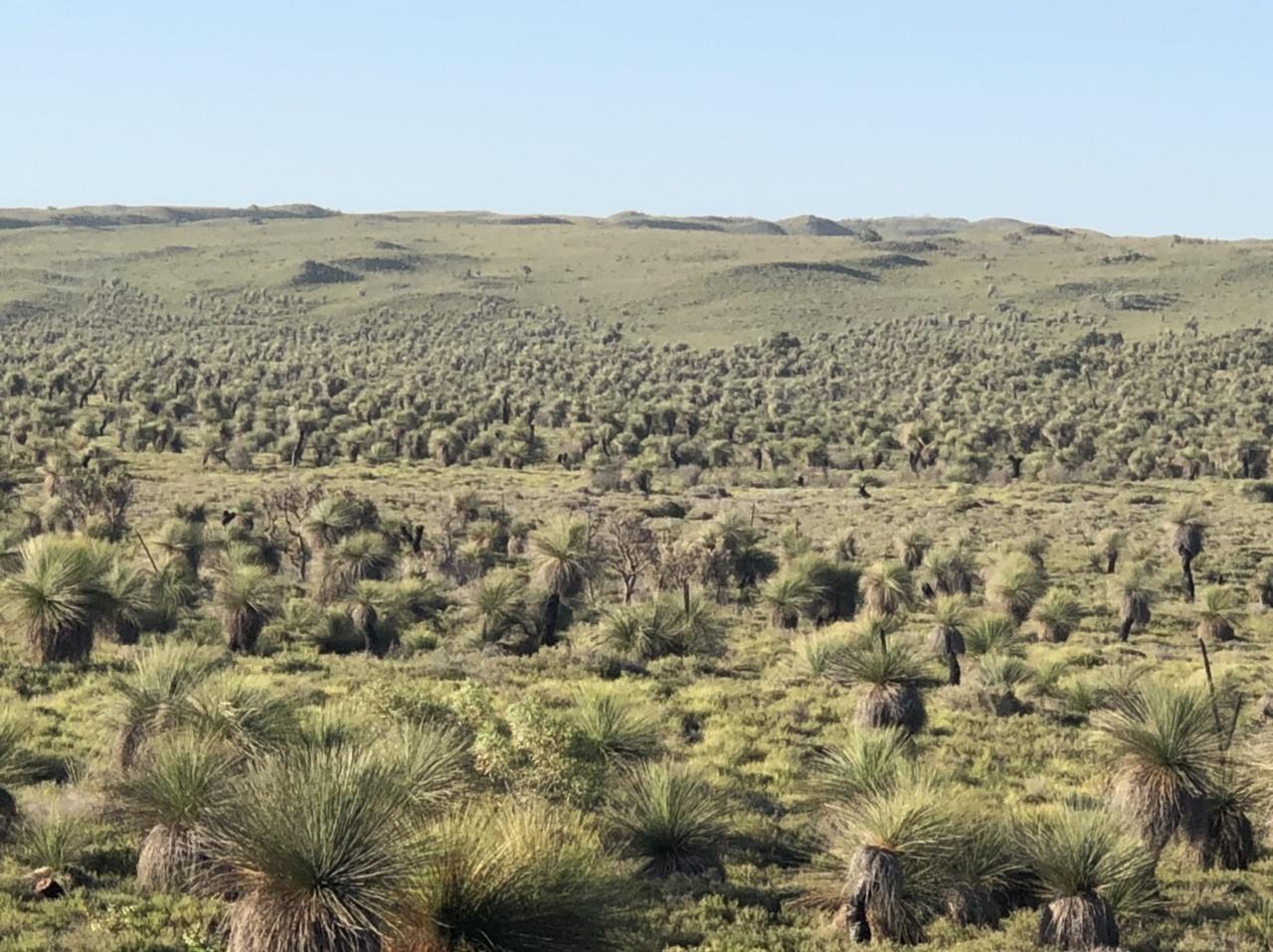 ピナクルズまでの移動で、オーストラリアの大きさを感じ、広大な牧場、地平線に感動。ピナクルズでは、自然が生み出す景色に驚き。特に、夕暮れは哀愁漂う景色を演出します。日中、40℃の暑い日でしたが、夕方は過ごしやすく、おすすめです。最後に、ガイドさんのホスピタリティーがすばらしかったです。