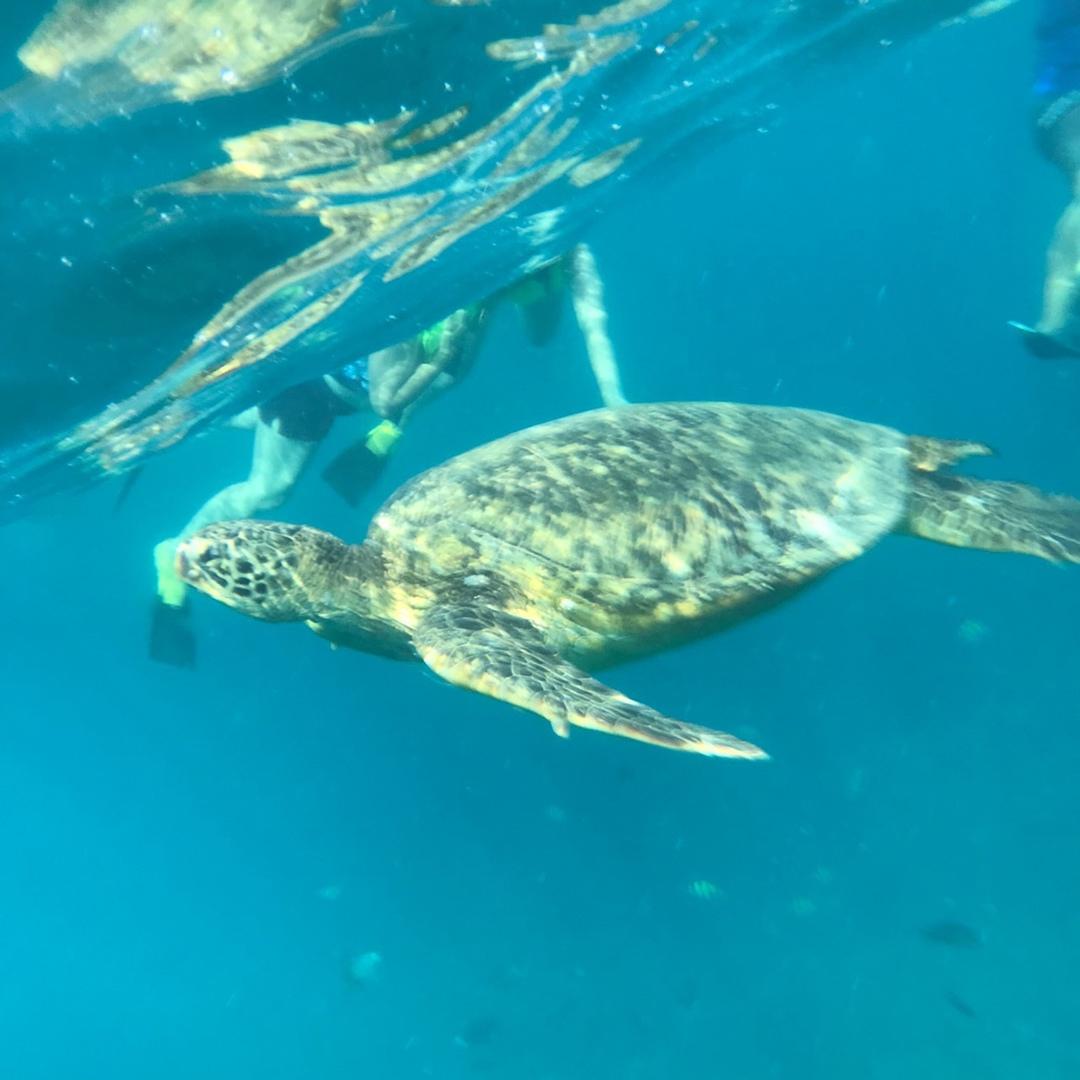初のハワイで、せっかくなので記念になる事をと思い、こちらのイルカ大学さんのツアーに参加しました。私達の場合は、船を走らせてすぐにイルカと遭遇でき難なくイルカを見ることが出来ました。その後も、カメにも出会えました。何と親子3匹で泳いでいたんです。1時間に1回くらいしか水上に出てこないそうですが、ちょうどタイミングよくその姿も見る事が出来ました。最後にスタンドアップパドルをやったり、滑り台やったり遊びも充実していて最高に楽しかったです。現地スタッフも楽しい方たちばかりで本当に最高の想い出になりました。機会があれば、また参加したいです。お勧めですよ!