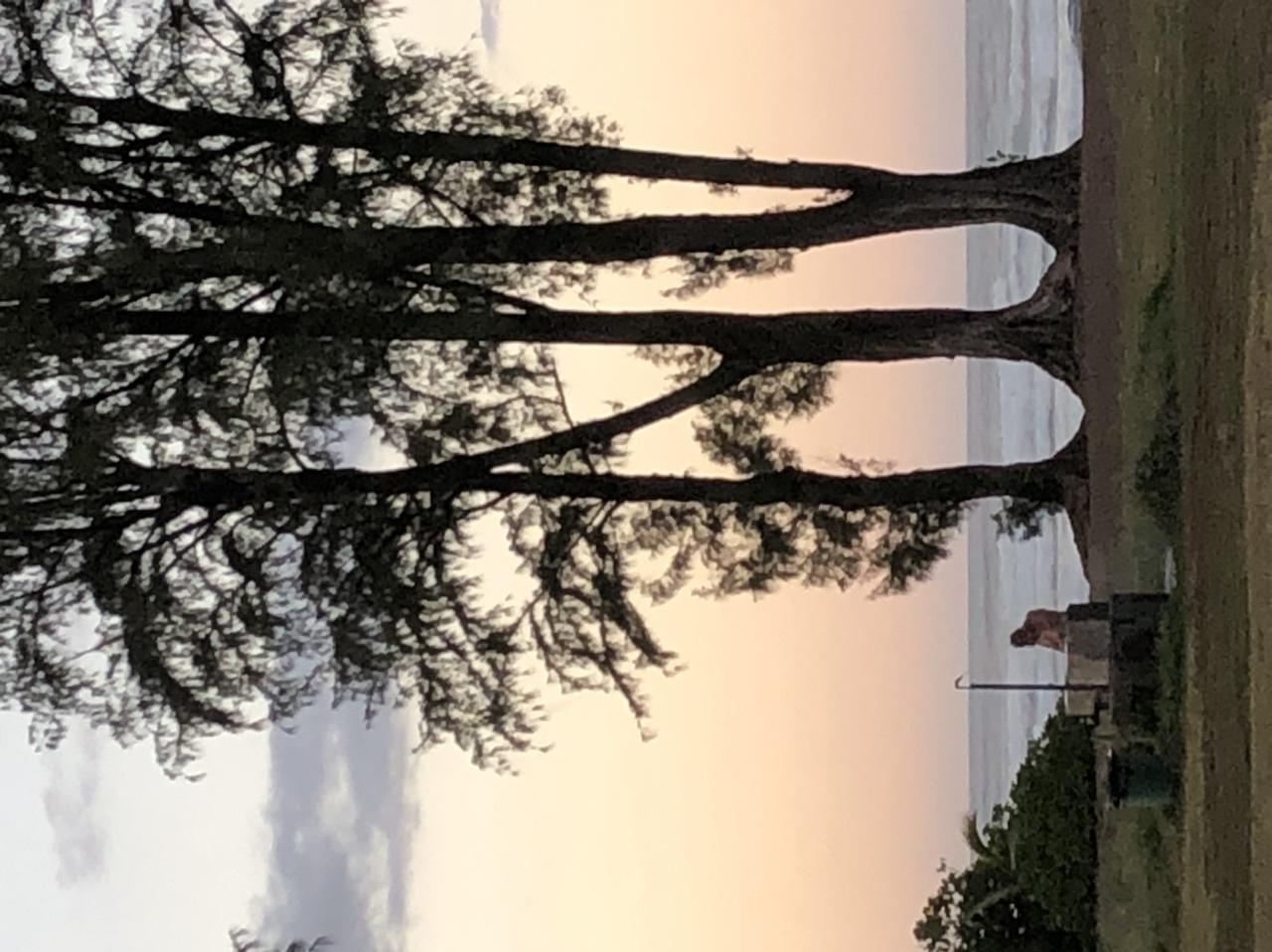 天候に恵まれ最高の夕日と星空がみれた。 亀さんも見れました。 星空は蚊に刺されます。 ガイドさんが面白い。