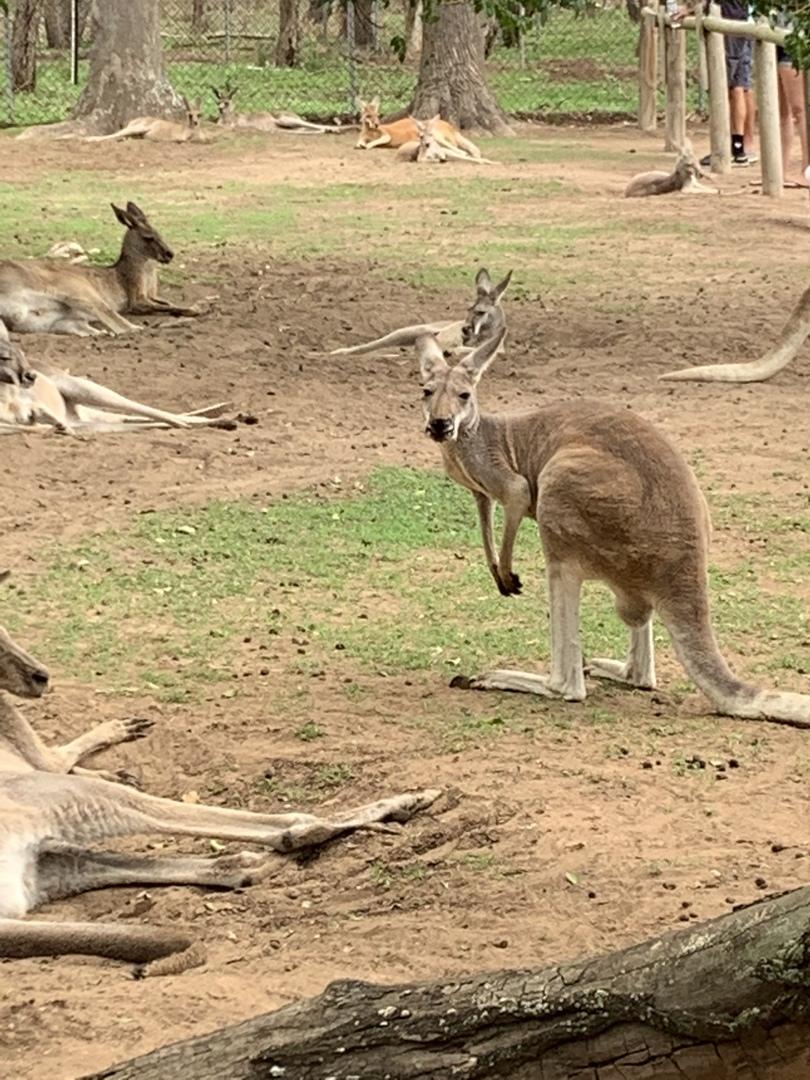コアラは寝てばかりと聞いていましたが、その通りでした。カンガルーが人に慣れていて、手から餌を食べてくれ、可愛かったです。