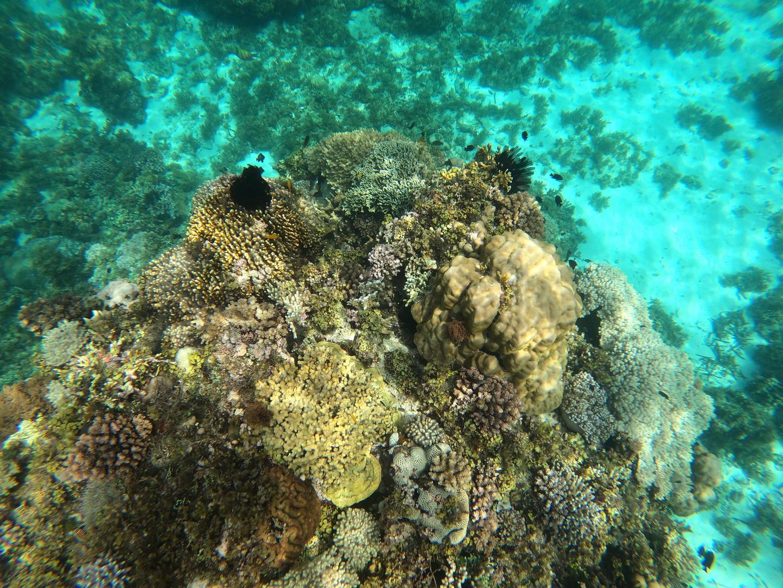 バリカサグの海は綺麗でサンゴ礁や綺麗な魚はシュノーケリングでも充分楽しめた。また海亀にも会えた。ヴァージンアイランドは干潮だったので、思っていた綺麗さではなくただの干潟のような状態で、船も停泊するのに順番待ち状態だった。該当ツアーがキャンセルが出たらしく、貸し切り状態だったので特に満喫出来て良かった。またブルーウォーターパングラオのダイビングショップが主催でしたが、受付に日本人女性がいたのでとても心強かったです。
