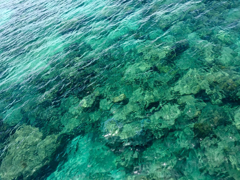 鳥の多い島ですので到着して島に入るとそれなりの匂いがしまがなぜかそこだけしか臭いませんが… 臭いと感じるのは個人差があると思います。  島を一周してから自分達でシュノーケルをしました。少し沖まで泳いでいくと色とりどり大小の魚達、まだ生きている綺麗なサンゴが見れました。何よりも驚いたのは1M近くのアカウミガメに会えた事です。泳いでいるとまるで私たちの後をついてくるように近づいてきました。 他の島にも行きましたがグリーン島だけで十分だったような気がします。 次回はグリーン島アウターリーフに行きたいと思います。