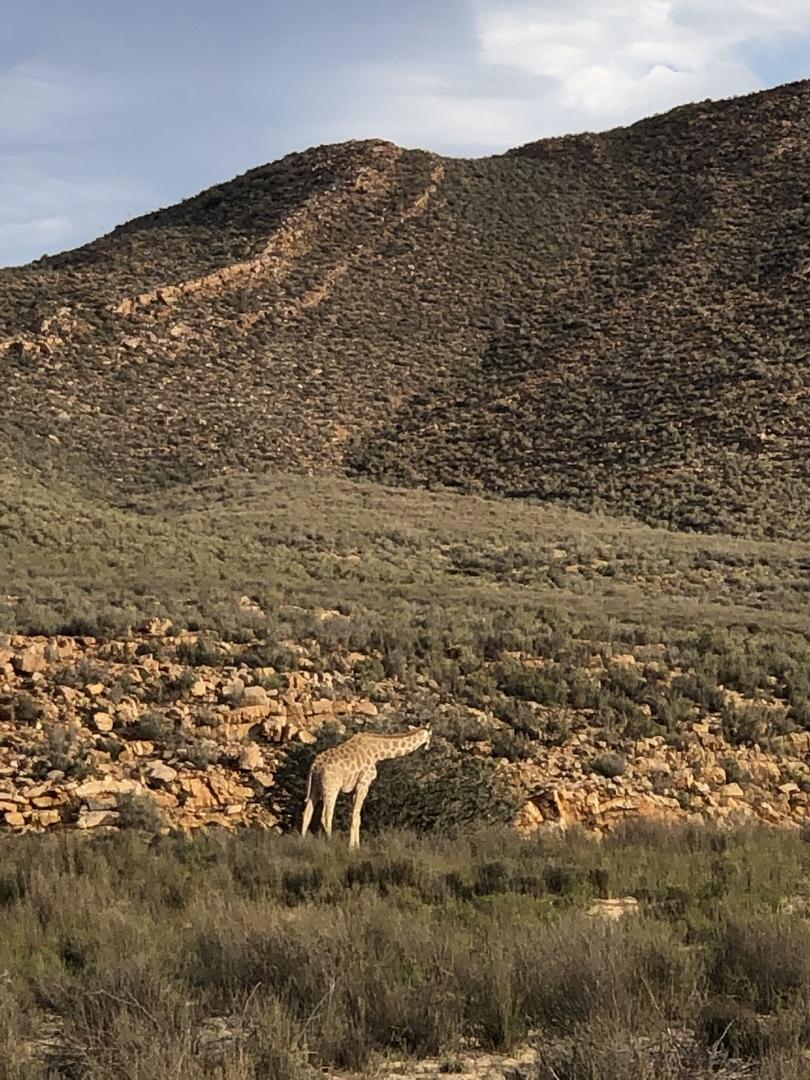 ワイルドな景色と動物の生活を垣間見る事が出来て満足! 保護区の動物達なので、生きるか死ぬかの環境ではありませんが、象とサイの餌場の取り合いやシマウマの美しい縞柄じっくり観ることが出来ました。勿論他の動物も盛り沢山会えました。広野にあるホテルの屋外プールにクジャクが散歩に来て驚きました。 HISのヨハネスブルグ店の方々が参加前の不明点等メールでの質問に敏速に答えてくださり、とても安心出来ました。 ありがとうございました。