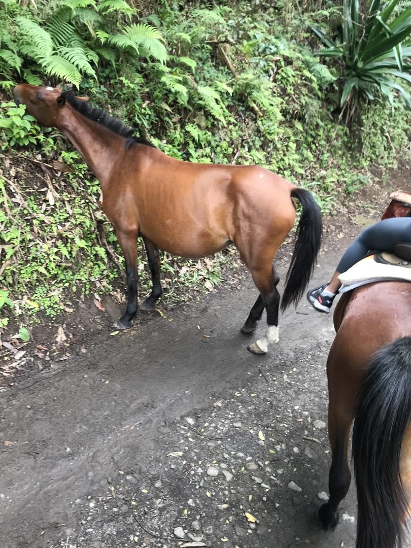 父と母と3名でのツアー参加でした。 初乗馬とあってとても不安でしたが、70近い父母も難なく乗りこなせました^_^ 植物の話や、ハワイ島の町の歴史、説明もわかりやすく乗馬もなかなかできない体験でとても満足です。 道中もずーっとお話してくれて退屈しないツアーでした^_^ ガイドのポールさん、よかったです^_^! また違うコースで乗馬参加したい!