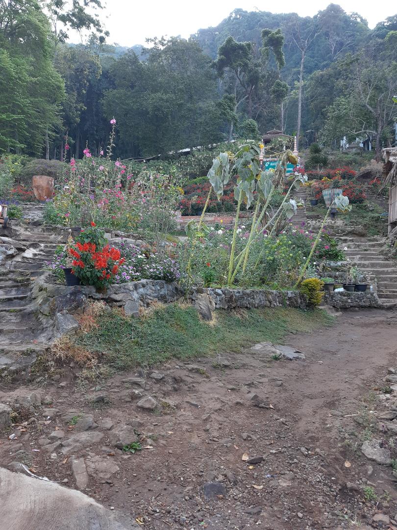 ドイステープ寺院とメオ族の村は結構離れていたので、両方回るためには、ソンテウで移動するよりかなり効率的でした。