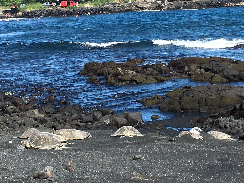 とても充実したツアーでした! 移動距離は長かったものの、ツアーガイドのスーさんの楽しいトークで退屈することはなく、ハワイ島の色々な情報を知ることができました。 ツアーの内容はどれも大満足で、ウミガメが見れたこと、地元の夕食が食べれたこと、そして、とにかく満天の星、流れ星、素晴らしかった〜!感動です!星座の説明も面白かったです。