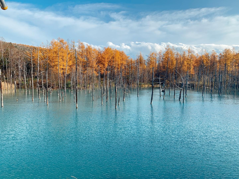 旭山動物園、美瑛の青い池を当初は友人と二人でレンタカーを借りて行く予定でした。 しかし急遽友人行けなくなってしまい、一人旅に。 車がないと1日で回れないので諦めてましたが、こちらのツアーを見つけて参加。  go toで更にお安くなって地域共通クーポンも頂けて実質3000円程。富良野も見て回れるのでとてもお得なツアーです。 オフシーズンの秋の終わりに行ったとのこともあって、渋滞などなく全行程が終わって19時には帰ってこれました! (コンダクターの方もこんなに空いている動物園は今後ないだろうと仰ってました)  富良野もビニールハウスに少しだけラベンダーがまだ咲いていて、植ってるラベンダーは見れないと思っていたので見れて良かったです! ラベンダー畑は見れませんでしたが銀杏並木が色付いていて綺麗でした。  青い池は、雨予報で前日に雨が降ったにも関わらずスッとはれて綺麗な青い色を拝めました。今後、こんなに人の少ない青い池に行けるのは中々ないと思うので貴重な旅になりました!