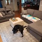 Katie 72 Charcoal Sofa Bobs Com