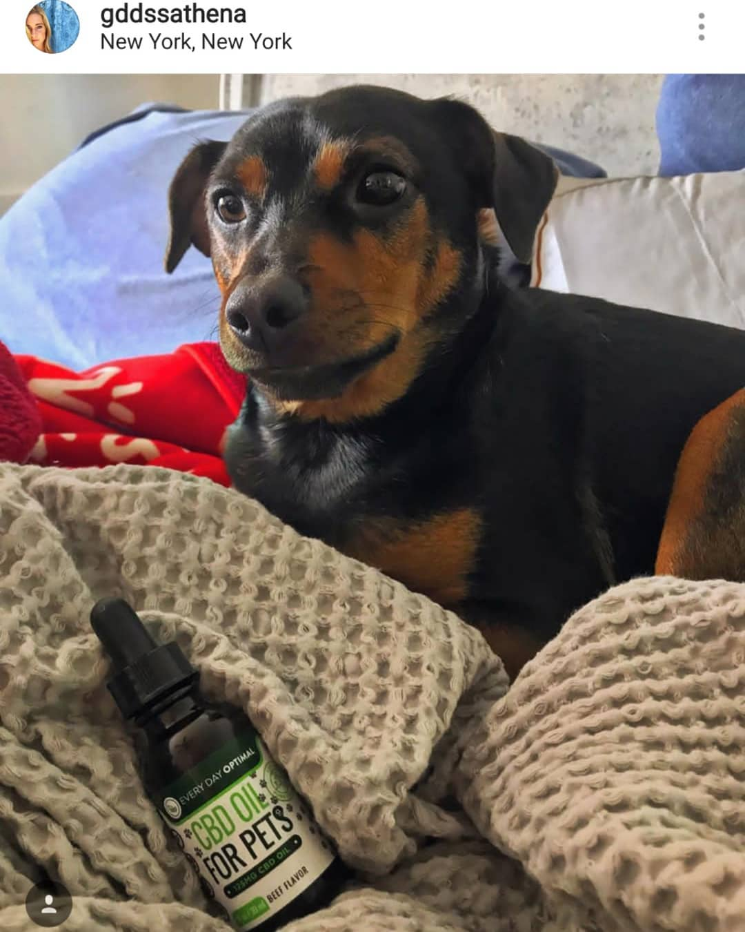 CBD Oil For Cats and Dogs | Beef Flavor Cannabidiol Oil For Pets