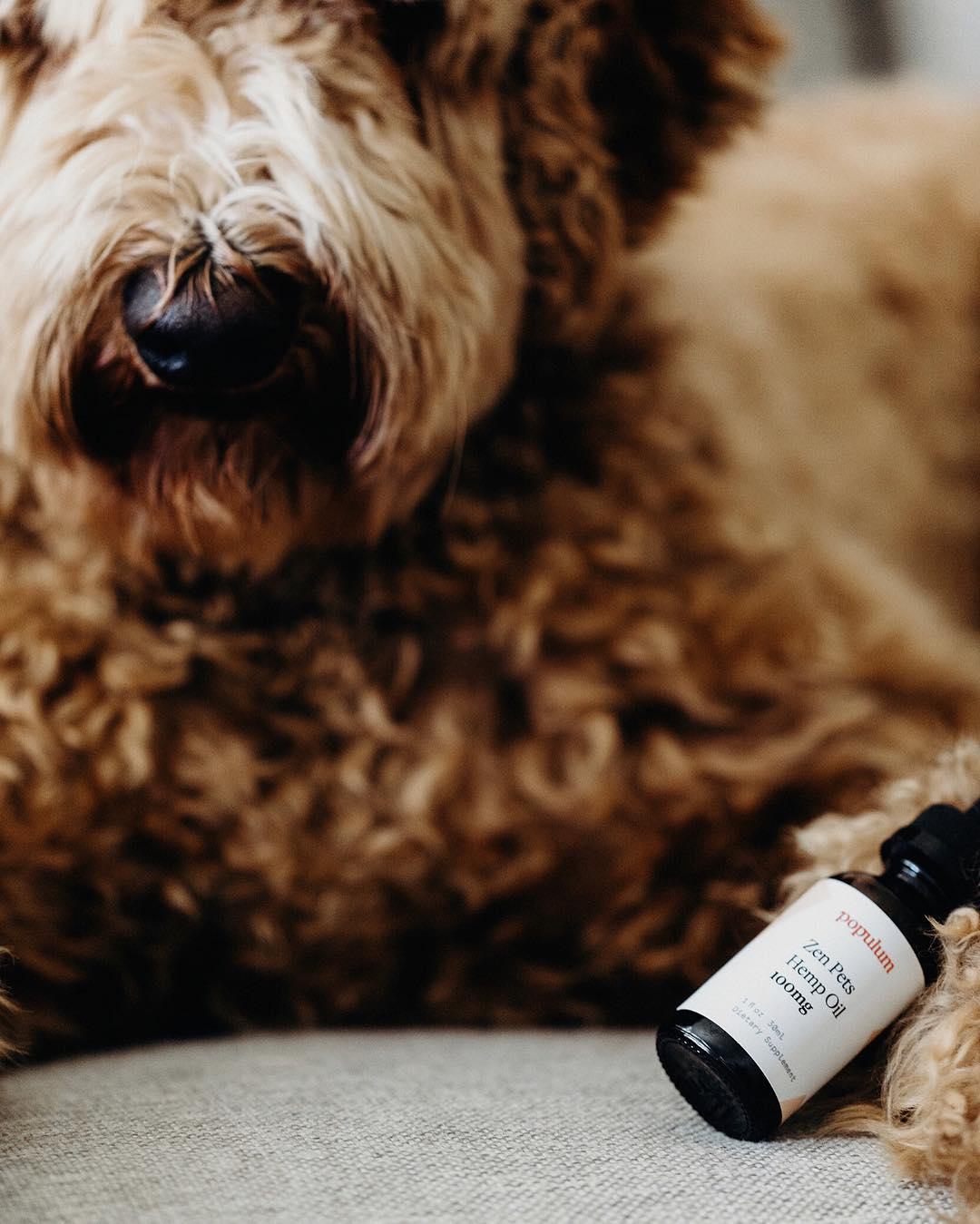 CBD Oil for Pets | CBD oil for Dogs | Populum Zen Pets CBD Oil